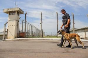 Ninguém fugiu da Penitenciária Estadual de Santa Maria (PESM) desde que a instituição foi inaugurada em fevereiro de 2011. Os mais de 500 presos são vigiados por 101 agentes e 24 cães. A Razão acompanhou uma ronda (foto) na maior cadeia da região Central