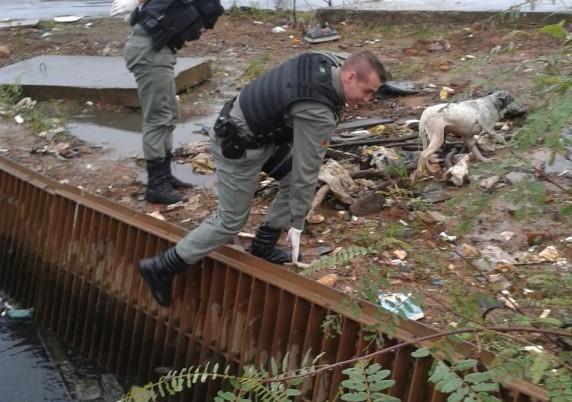 Cão é resgatado pela BM após cair em valão de Canoas | Foto: Brigada Militar