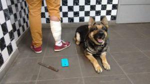 Cachorro imobilizou suspeito com mordida na perna direita. Foto: divulgação / Brigada Militar